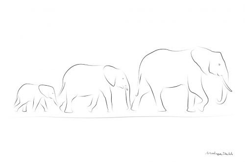 Elephant Family pos